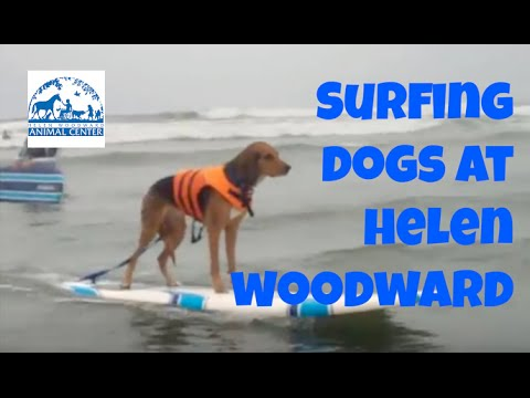 Surf Dog Lessons – Dogs Surfing on July 27