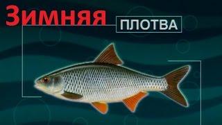 Диалоги о рыбалке ловля плотвы