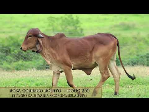 Rosa Córrego Bonito - DOUG 253
