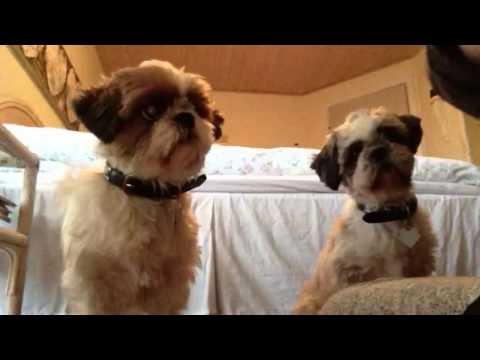 video med hunde