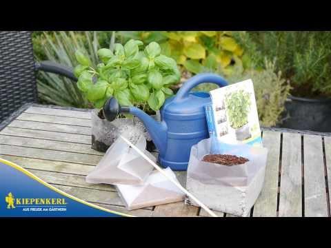 Kiepenkerl Mini-Anzuchtset - Kinderleicht Gärtnern