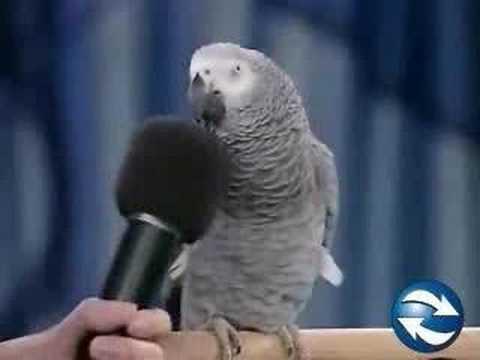 Funny Bird 1 - Talking Bird