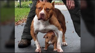 Cute Mother DOgs Protecting Their Babies Compilation -  Dog Protects Puppy Videos