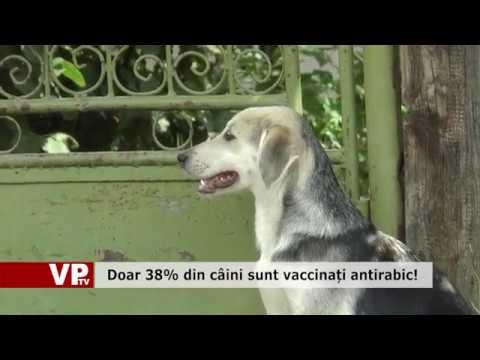 Doar 38% din câini sunt vaccinați antirabic!