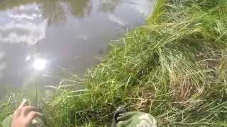 Ловля на удочку ранней осенью,видео rybachil.ru