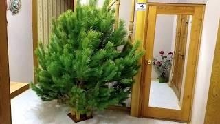 Моя Новогодняя елка 2020 г. Украина.