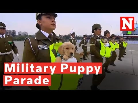 This Military Parade in Chile has Puppies