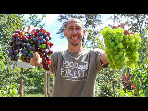 , title : 'How to Grow Grapes, Complete Growing Guide
