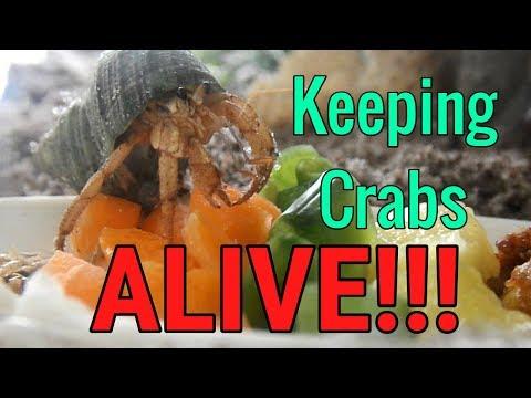How to keep hermit crabs ALIVE!!!