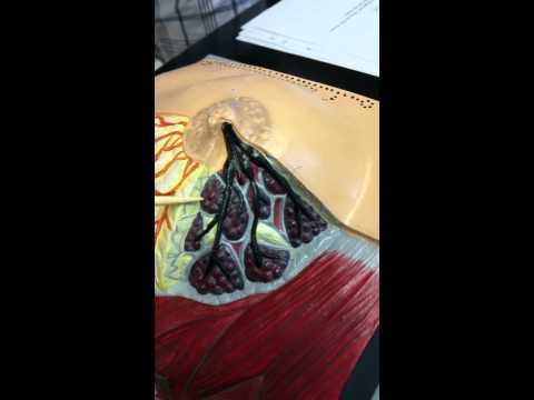 Feces on bulating parasito sample