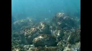 preview picture of video 'Viaggio sottomarino a Castelsardo'