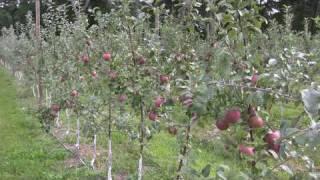 UMass Video Fruit Advisor, 09-September 2009