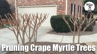 How To Properly Prune Crape Myrtle Trees Planted in Small Spaces