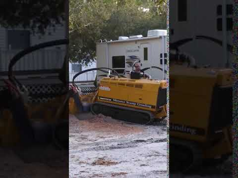 Carolina Shores Stump Grinding Same Day Service Call now 910-467-8369