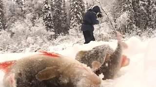Зимняя рыбалка северная сосьва 2018
