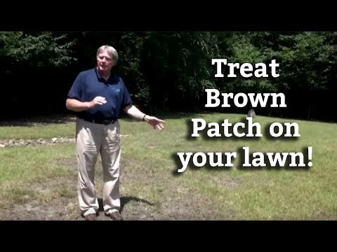 Video Brown Patch and Large Patch Lawn Disease