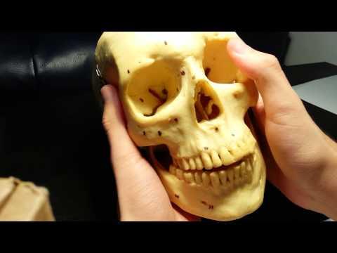 Dolore colonna vertebrale toracica