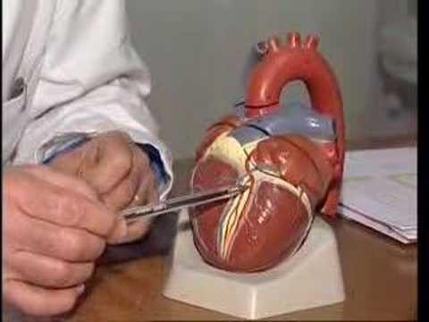Un metodo di Korotkoff tecnica di misurazione della pressione sanguigna