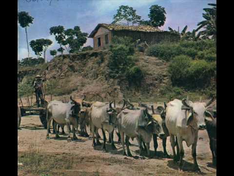 Música Garanhão Selvagem
