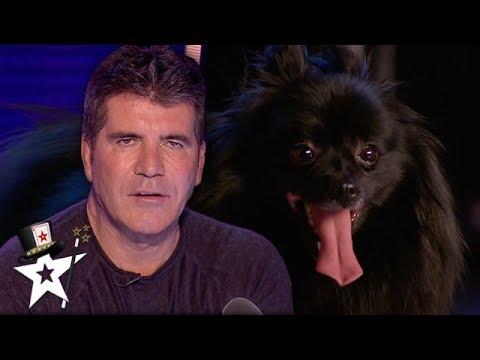 When Simon Cowell Got Hypnotised on Britain's Got Talent | Magicians Got Talent (видео)