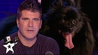 When Simon Cowell Got Hypnotised on Britain's Got Talent   Magicians Got Talent