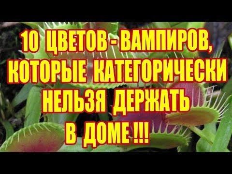 10 Цветов-вампиров,которые КАТЕГОРИЧЕСКИ нельзя держать в доме!!!