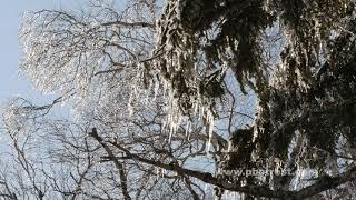 樹氷の動画素材, 4K写真素材