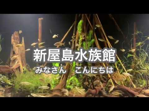 新屋島水族館【公式】絶滅危惧種『ニッポンバラタナゴ』『カワバタモロコ』