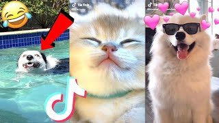 Best cute & funny animal videos -Tik Tok 2020 #1