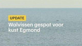 Walvissen gespot voor kust Egmond - RTL NIEUWS