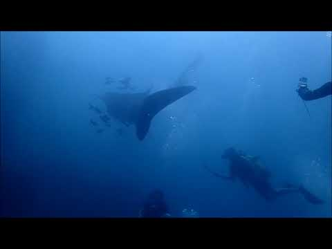 Dive Phi Phi Marine Park with Whale Shark