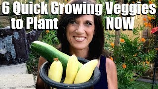 6 Quick Growing Vegetables to Plant NOW in Late Summer for Fall Harvest