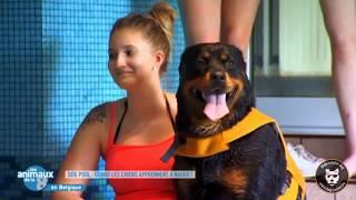Dog Pool : les animaux de la 8 débarquent !