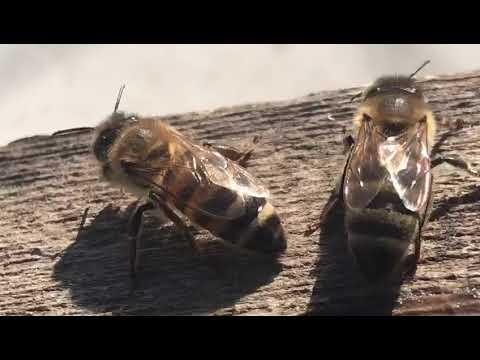 Cum să elimini papilomele mici sub axilă