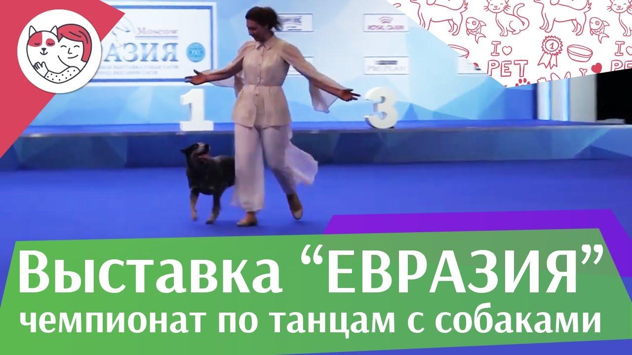Чемпионат РКФ по танцам с собаками 7 на Евразии 17 ilikepet
