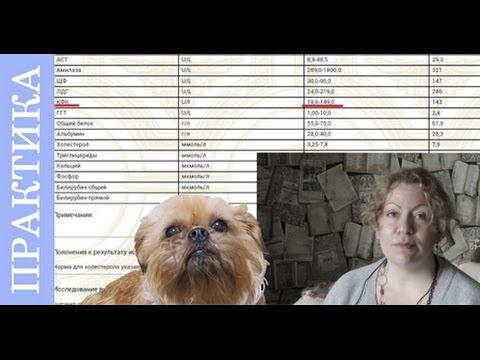 Расшифровка анализа крови собак. Советы ветеринара