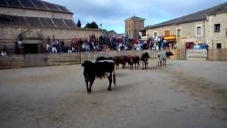 preview picture of video 'Encierros Pedraza 2010'