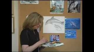 How To Draw A Dolphin By Jan Brett