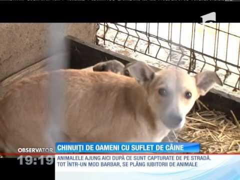 Satu Mare - Animale chinuite de oameni cu suflet de câine 2015