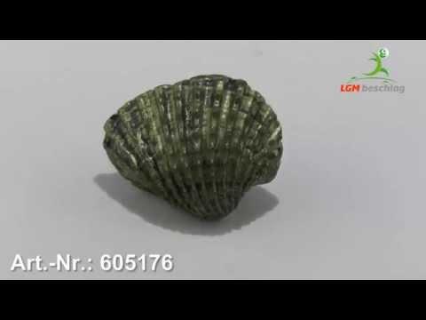 Möbelknopf, Meer, Muschel, Kinder, Kunststoff - Altmessingfarbig brüniert, ArtNr.: 605176