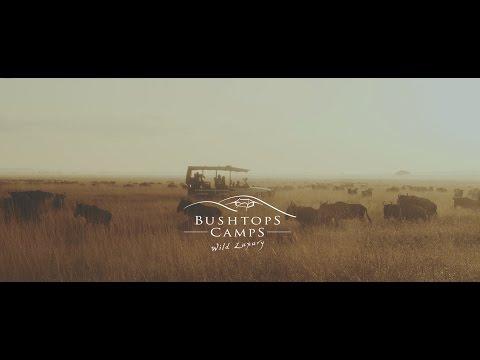 Roving Bushtops Video