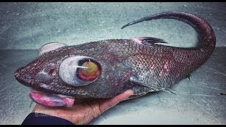 เกิดมาเพิ่งเคยเห็น!!!..10..อันดับ..ปลาลึกลับที่ถูกจับได้โดยบังเอิญในมหาสมุทร#ตามไปมอง