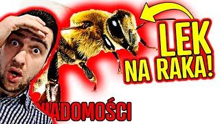 Pszczoły LECZĄ RAKA! To odkrycie naukowców ZMIENI ŚWIAT | WIADOMOŚCI