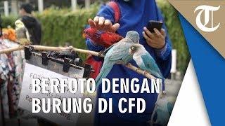 Melihat Burung yang Jinak di Acara CFD, untuk Berfoto Dikenakan Biaya Rp5 Ribu