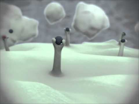 Biochemie der Prostata