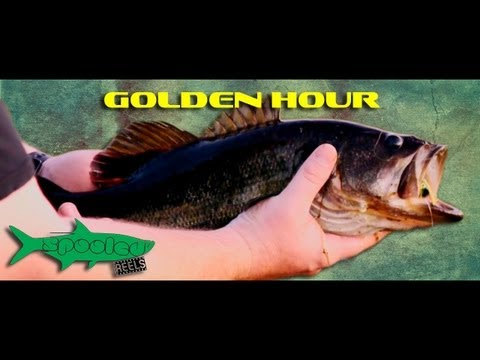 Golden Hour - Largemouth Bass on the Fly