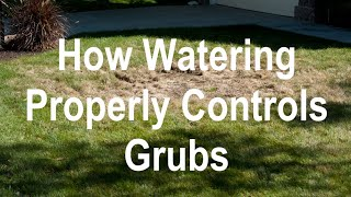How to Kill Grubs in a Lawn without Chemicals - Control Grubs by Watering Differently - Organo Lawn