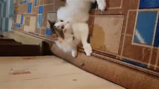 Киса и майский жук. Приколы с кошками!!!