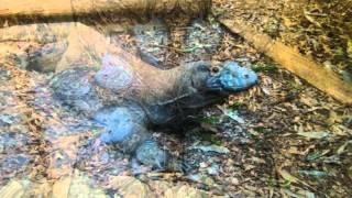 The Amphibian (Steve Kilbey Remindlessness)