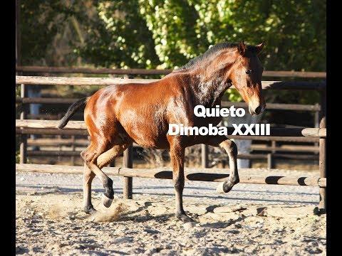 Quieto Dimoba XXIII (Publicado 3-12-2018)